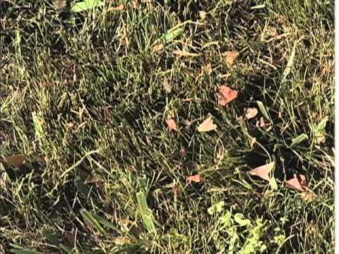 Quoi faire des feuilles mortes en automne atelier jean for Broyeur de feuilles mortes