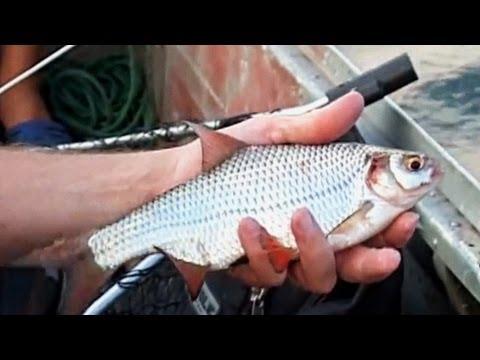 видео про рыбу фидер