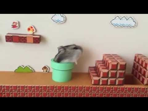 Super Mario Bros Themed Hamster Obstacle Course