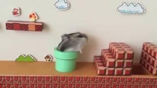 فيديو طريف: فأر يلعب سوبر ماريو