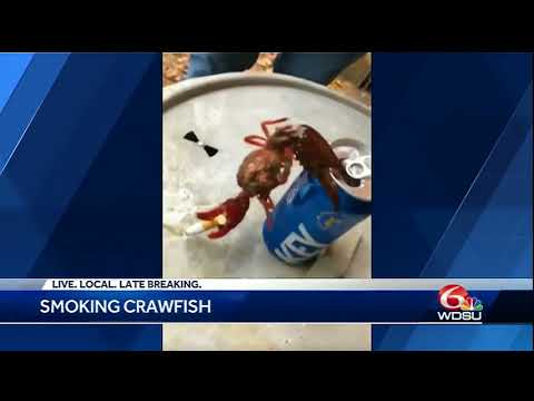 Crawfish hanging on beer can with cigarette goes viral (видео)