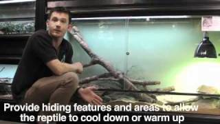 Reptiles: housing 2: creating a habitat