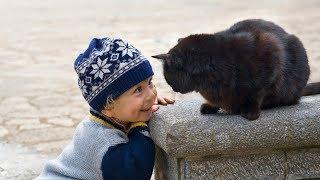 Video Funny Cats Protecting Babies Compilation (2017) MP3, 3GP, MP4, WEBM, AVI, FLV Maret 2018
