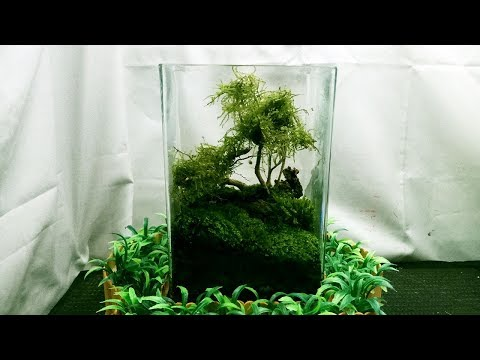 How to build terrarium of moss on a covered glass square_Terrárium, Vivárium