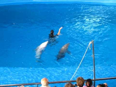 Show de delfines en el zoológico de Barcelona