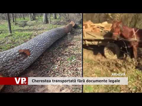 Cherestea transportată fără documente legale