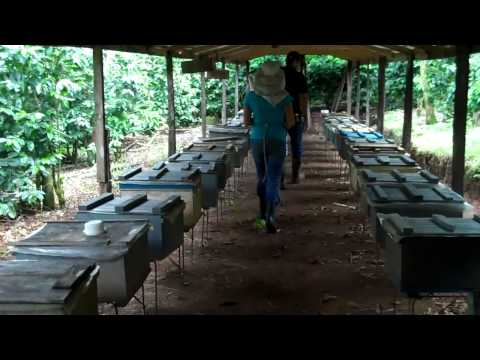 Visit to Enoch's Apiary in San Ramon, Costa Rica