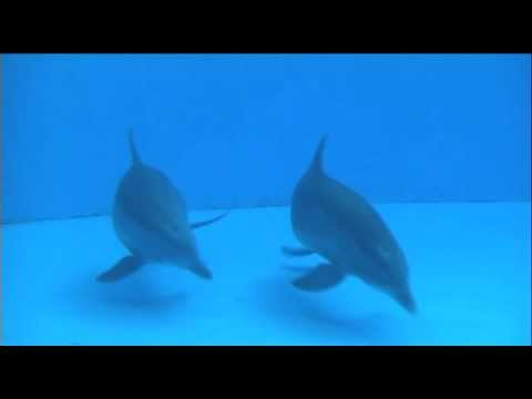Dolphin giving birth caught on camera