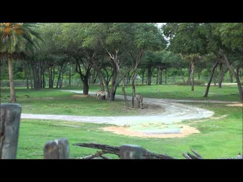 Disney World Hotels-Disney's Animal Kingdom Lodge, Walt Disney World (HD 1080p)