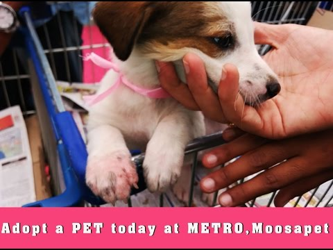 Pet Adoption At Metro In Hyderabad.