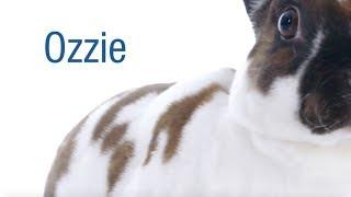 Meet our April Second Chances Calendar Star, Ozzie!