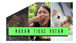 Video MAKAN TIKUS HUTAN - JEJAK PETUALANG EXTREME (Malola-Minahasa Selatan), Agustus 2017. MP3, 3GP, MP4, WEBM, AVI, FLV Oktober 2017