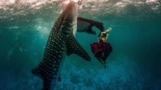 Whale Shark Fashion Shoot