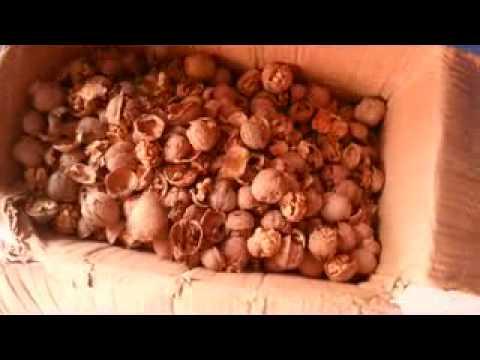 Станок для грецких орехов