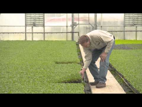 Meijer Locally Grown: E. Miedema & Sons Inc.