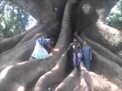 Lalbagh sex