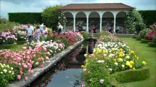 Albrighton United Kingdom  city photo : David Austin Rose Garden