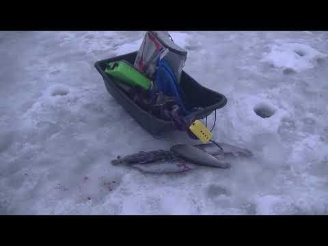 Видео отчет о рыбалке за 8 декабря 2018
