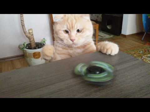 Забавный кот крутит спиннер