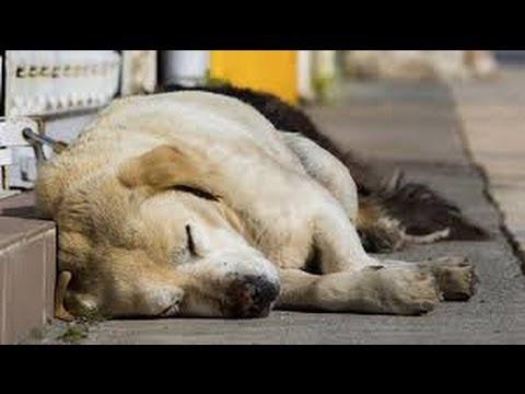 Sochi Olympics 2014 – Dogs Killed