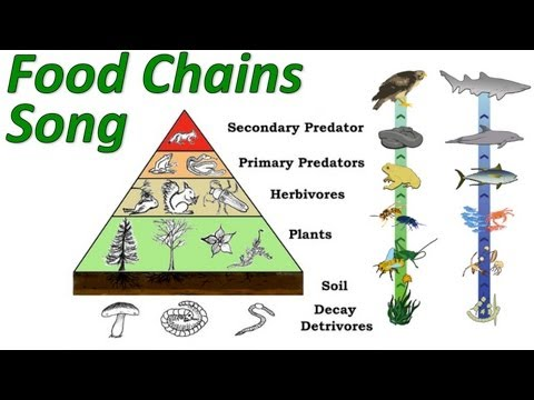 Food chains food webs and energy transfer 5 11 good for discussion