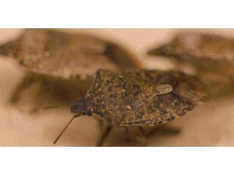 How Do You Get a Bed Bug Infestation? | Pest Control