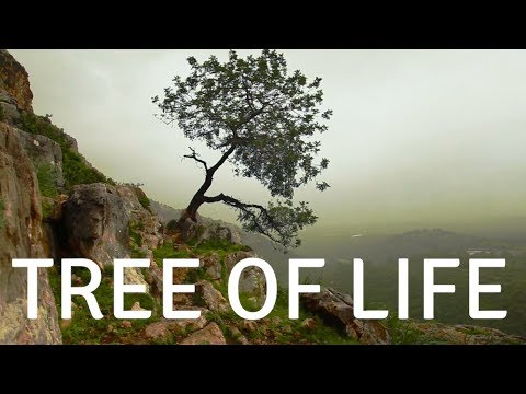 TREE OF LIFE( With Music) A Guided SLEEP Meditation For DEEP Sleep And Healing, Peace And Calm Sleep
