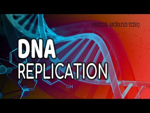 DNA Replication / Helicase / leading strand / Lagging strand / okazaki fragments