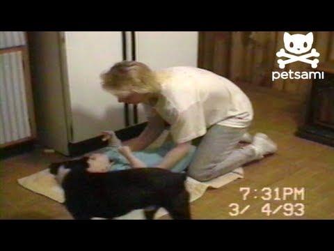 il-cane-che-aiuta-la-mamma-a-cambiare-il-pannolino-225