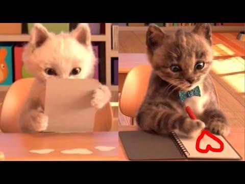 El Gato TOM VIDA REAL, Little Kitten ,¡CARTA DE AMOR! My Favorite Cat, Lindo Gatito