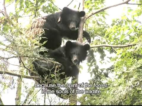 Huang Mei-sho: Guardian of the Formosan Black Bears