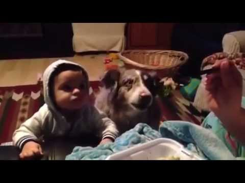"""cane dice """"mamma""""!"""