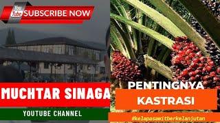 Download Lagu Kastrasi Kelapa Sawit Mp3