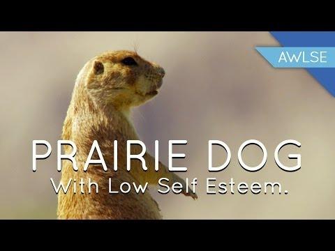 Prairie Dog With Low Self Esteem: She's No Hero