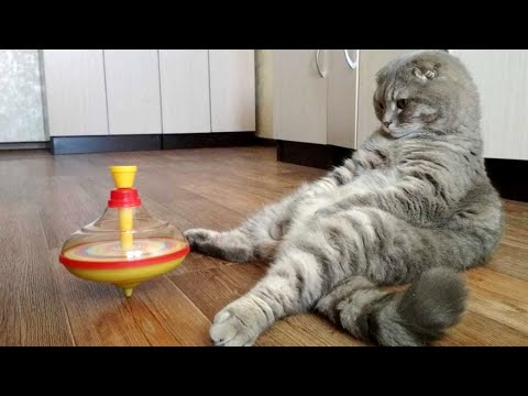 Watch These Funny Animals Get Into Mischief!
