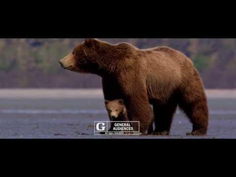 Bears (TV Spot 1)