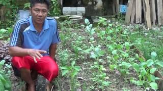Video 6 Cara Pengendalian Hama Alami dalam Berkebun Sayuran Organik di Pekarangan Rumah MP3, 3GP, MP4, WEBM, AVI, FLV April 2017