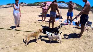 Ragusa Italy  city photo : Traveling to Marina di Ragusa, Italy with your dog
