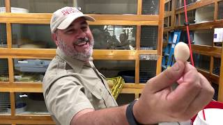Snake Discovery of Smallest Egg Ever Seen by Prehistoric Pets TV