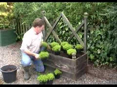 Hoggywart - A garden is a living thing and I'm of the belief that as much of the garden as possible should contain plants. I also say that all gardens should have somewh...