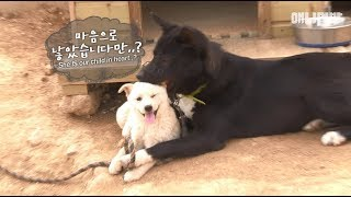 Video Parent dogs looking after a stranger puppy like their own darling baby MP3, 3GP, MP4, WEBM, AVI, FLV Juni 2018