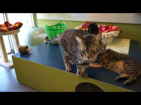 Video: WCJC Animal Shelter, May 3