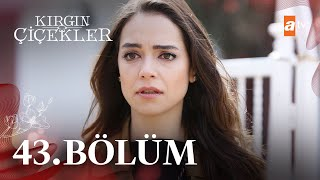 Nonton K  Rg  N   I  Ekler 43  B  L  M   Atv Film Subtitle Indonesia Streaming Movie Download