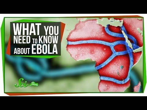Everything You Need To Know About Ebola In Four Minutes