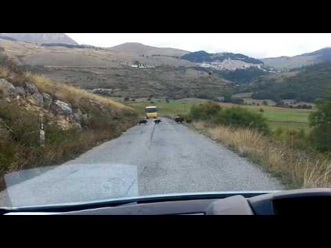 Castel del Monte: cento cinghiali tagliano la strada a uno scuolabus VIDEO