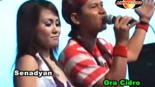 OM Sagita - tak tunggu balimu -  Budi feat  Eny Sagita