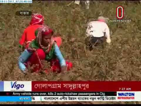 Red roses give thriving businesses to farmers (18-11-2017)