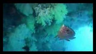 a short clip to remember a beatiful island of Meedu, Maldives.