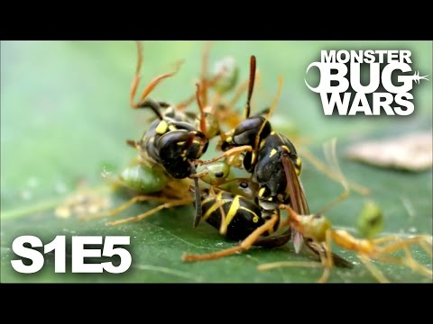 MONSTER BUG WARS | When Tribes Go To War | S1E5