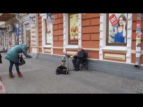 Днепропетровский пес стал звездой (видео)